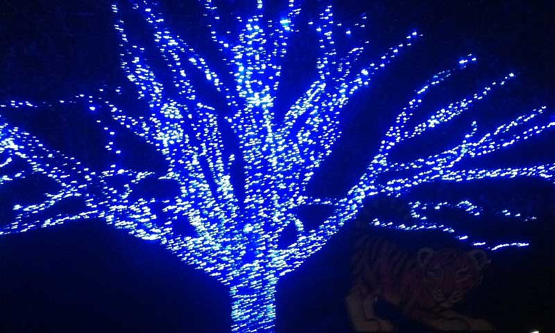Tiger Exhibit | DC Zoo Lights | Woodley Park Zoo